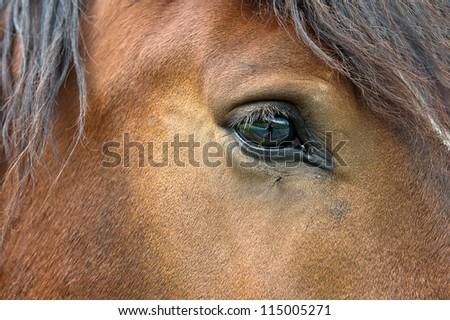 horses eye. closeup of brown horses head. selective focus - stock photo