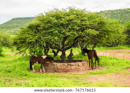Horses gazing and tree in the middle