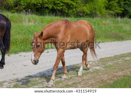 horses graze beside the road and forest and mountains - stock photo