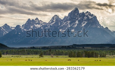 horses graze in a grassy meadow in the foreground of a dramatic mountain range - stock photo