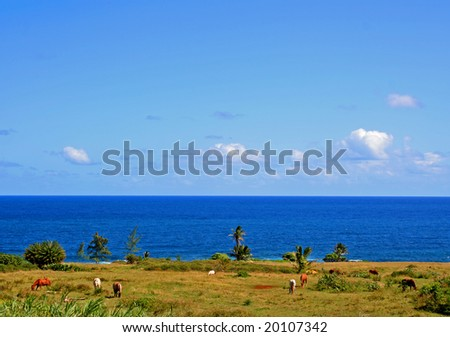 Horses graze in a paddock overlooking the Pacific Ocean on Maui, Hawaii - stock photo