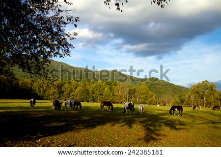 Horses graze in Cades Cove inside Great Smoky Mountains National Park
