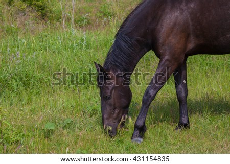 horses graze in the meadow in the forest - stock photo