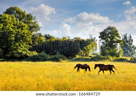 Horses graze in the meadow. Summer landscape. - stock photo
