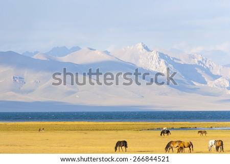 Horses graze in the pasture - stock photo
