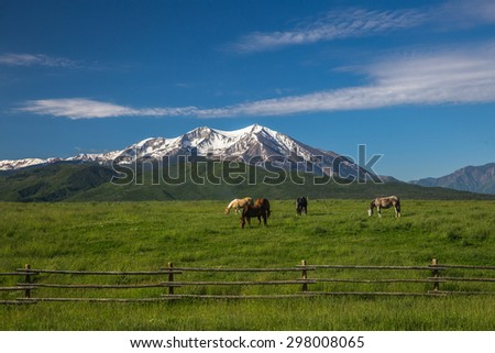 Horses grazing in a green meadow with a snowcapped mountain backdrop. - stock photo