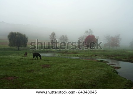 Horses grazing in a meadow on a foggy morning.