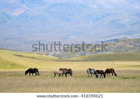Horses grazing in a meadow on the background of high mountains - stock photo