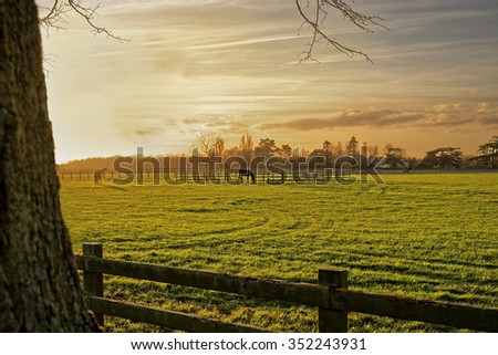 Horses grazing in a paddock in the autumn sunset - stock photo