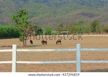 Horses grazing in a pasture with mountains in the background.  - stock photo