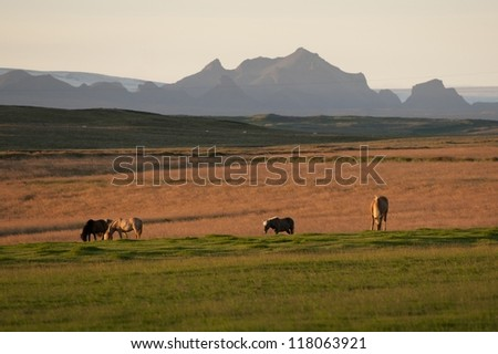 Horses grazing in a pasture with mountains in the background in the evening sun - stock photo