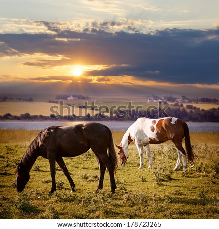 Horses grazing in a rural pasture at sunset with view of countryside - stock photo