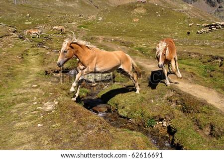 Horses grazing in mountain meadows - stock photo