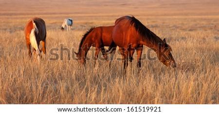 Horses grazing in pasture - stock photo