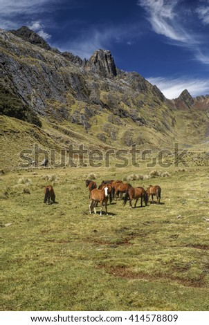 Horses grazing in scenic green valley between high mountain peaks in Peruvian Andes - stock photo
