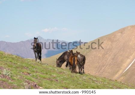 Horses grazing, Kyrgyzstan - stock photo