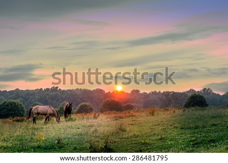 Horses grazing on a Maryland pasture at sunset - stock photo
