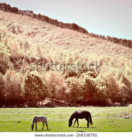 Horses Grazing on a Meadow of the French Alps, Vintage Style Toned Picture - stock photo