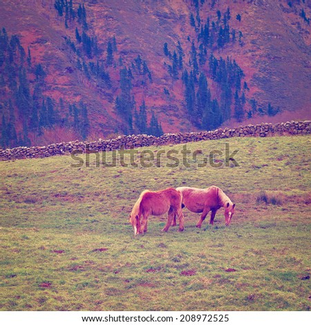Horses Grazing on Alpine Meadows on the Slopes of the Pyrenees, Instagram Effect - stock photo