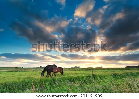 horses grazing on pasture at sunset, Netherlands