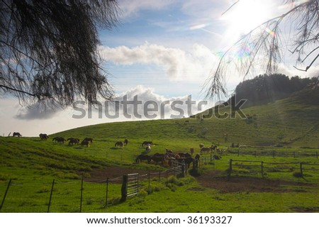 Horses grazing on the farm in Hawaii - stock photo