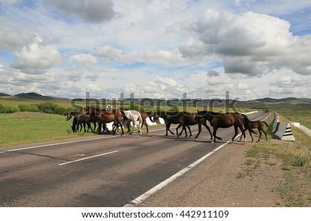 Horses grazing on the go across the highway. - stock photo