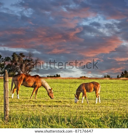 Horses grazing under a beautiful sky in the early morning of eastern Colorado, USA. - stock photo
