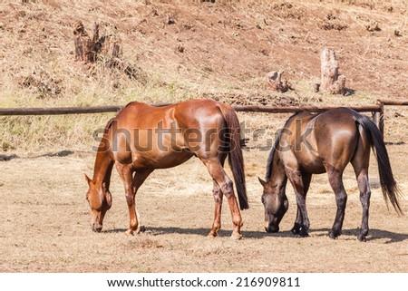 Horses Healthy Animal Horses animals detail outdoors - stock photo