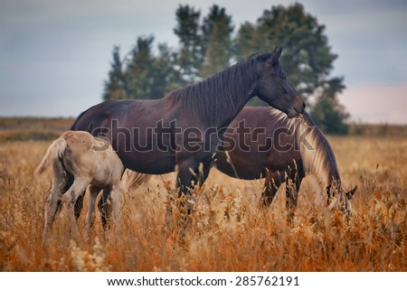 Horses herd in autumn field