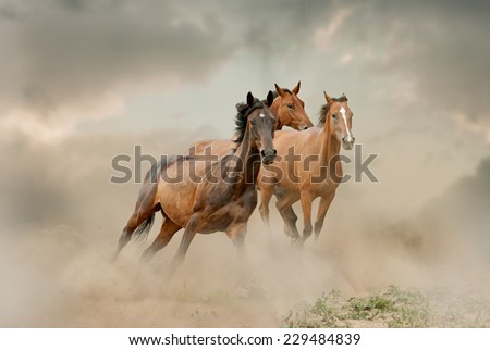 horses herd in dust - stock photo