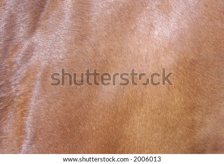 Horses hide - stock photo