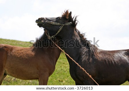 Horses hugging in a grazing. Space for text. Nice lovely picture - stock photo