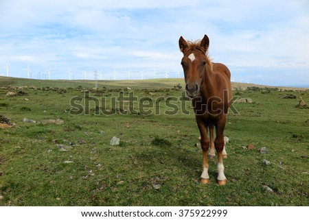 Horses in a field with wind turbines