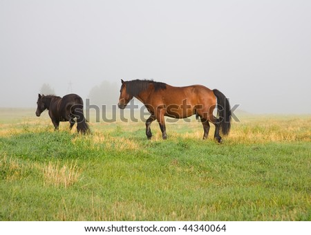 Horses in a meadow on a summer morning