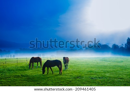 Horses in an early morning foggy field, Stowe, Vermont, USA - stock photo