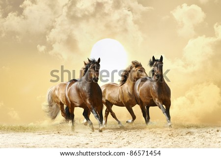 horses in autumn sunset - stock photo