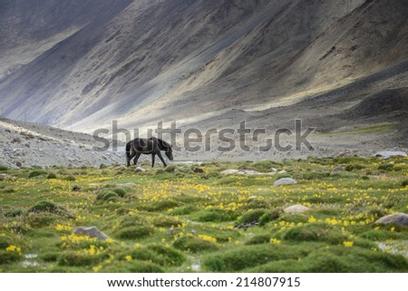 horses in field and mountain