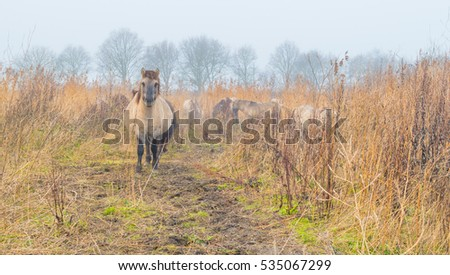 Horses in foggy wetland in winter