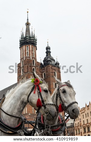 horses in Krakow - stock photo