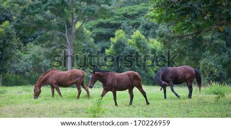 Horses in Lush Tropical Setting - stock photo