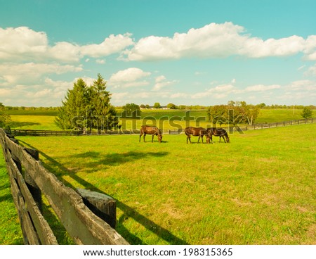 Horses in meadow. Country summer landscape. Vintage style,  toned. - stock photo