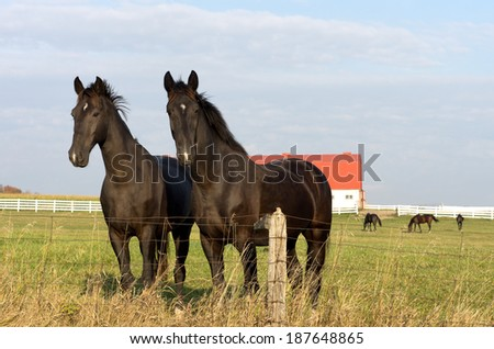 Horses in rural pasture by fence. - stock photo