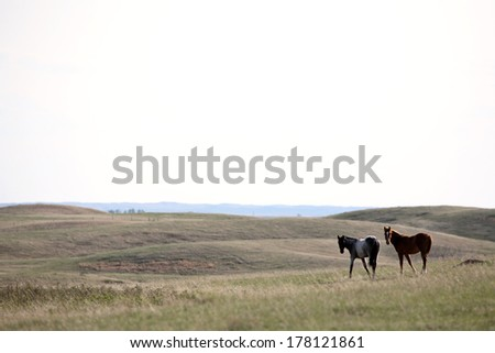 Horses in Sasktatchewan pasture - stock photo