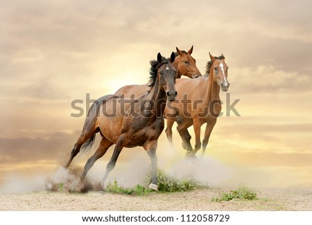 horses in sunset running in dust - stock photo