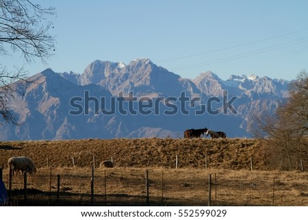 horses in the Dolomites mountains