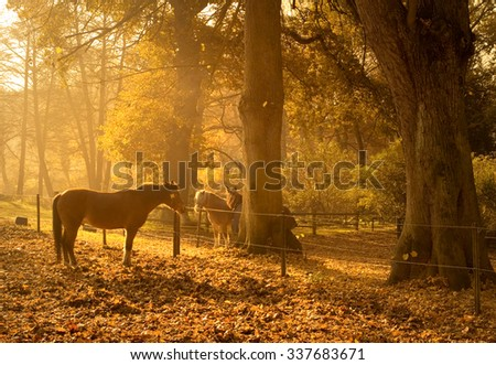 Horses in the early morning in autumn in the north Germany