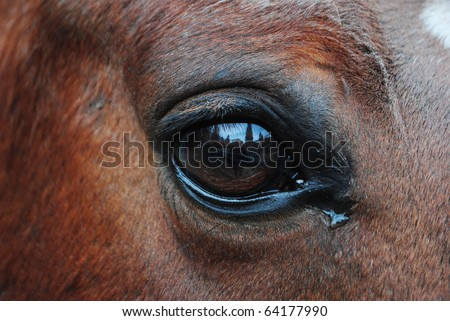 horses in the enclosure with curious eyes - stock photo