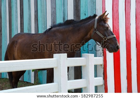 Horses in the Farm. - stock photo