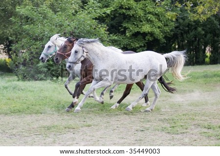horses in the farm