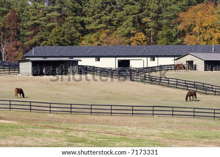 Horses in the fields with Barns - stock photo